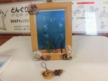 写真立ての中に海藻の絵葉書